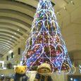 くまとクリスマスツリー